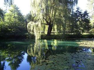 Image for the poem  Beside the pond.... (wistful)